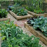 A vegetable garden in raised beds.